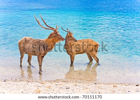 Two deer in ocean - stock photo
