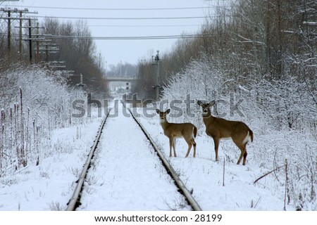 Two deer in snow by railroad - stock photo