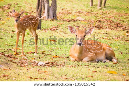 two deer is beautiful in park - stock photo