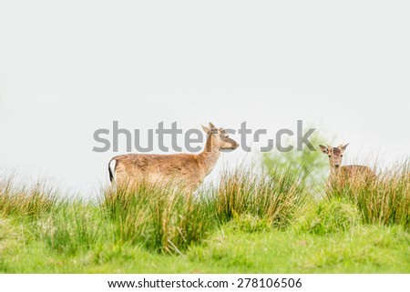 Two deers on a green field in the springtime - stock photo