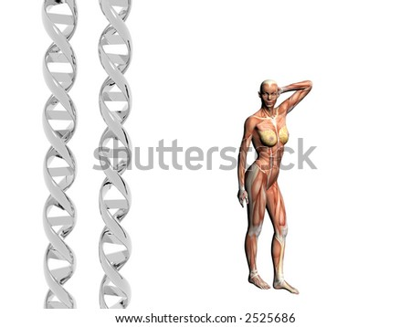 Two dna strands,  muscular anatomical correct female model.  Muscles as layer map on body. Evolution concept.