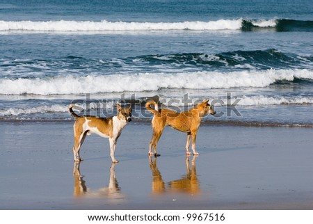 Two dogs - stock photo