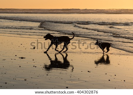 Two dogs at the beach at sunset