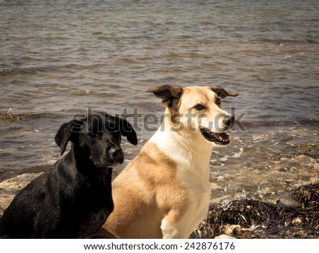 two dogs at the sea - stock photo