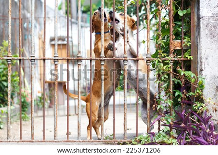 Two dogs dachshund playing in the yard. Selective focus - stock photo