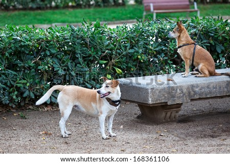 two dogs in a city park - stock photo