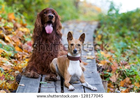 two dogs in autumn park