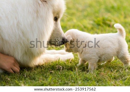 Two dogs in the grasslands play - stock photo