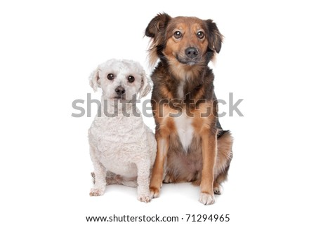two dogs isolated on a white background