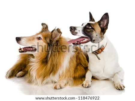 two dogs look to the left . isolated on white background
