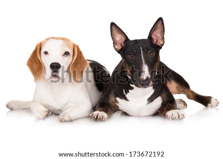 two dogs lying down together