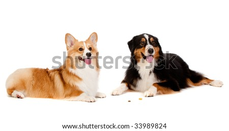 Two dogs obediently ignore the treats on the floor left by their owners - stock photo