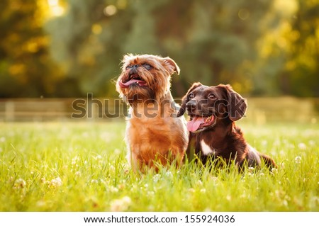 Two dogs on a summer outing - stock photo