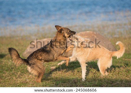 Two dogs play together