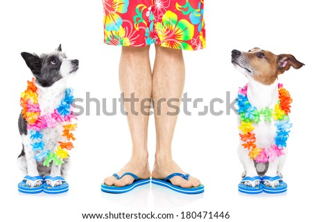 two dogs ready  for summer vacation looking up at owner - stock photo