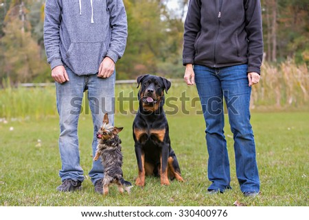 Two dogs sitting between owners legs