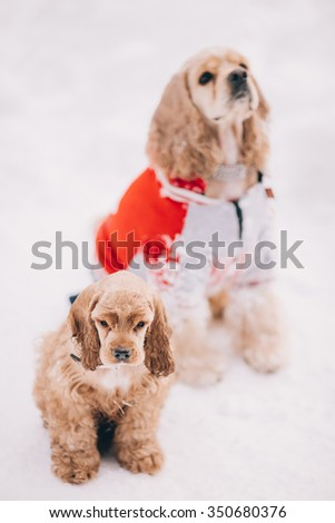 two dogs sitting in the snow - stock photo