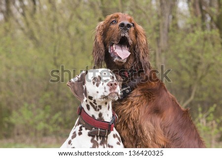 Two dogs sitting near each other looking to the trainer