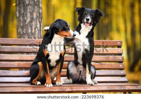 Two dogs sitting on a bench in the park - stock photo
