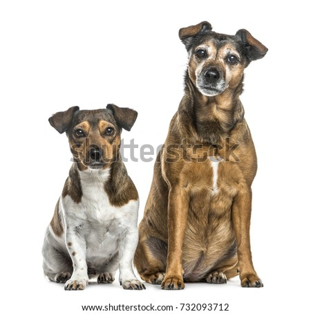 Sitting dog side
