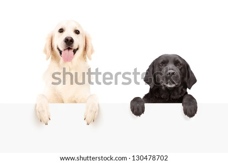 Two dogs standing behind blank panel isolated on white background - stock photo
