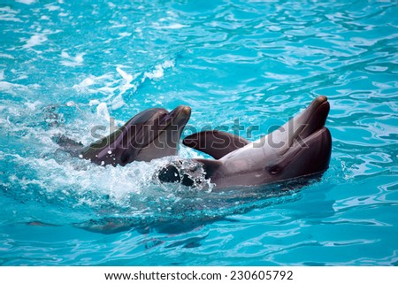 Two dolphins close up. - stock photo