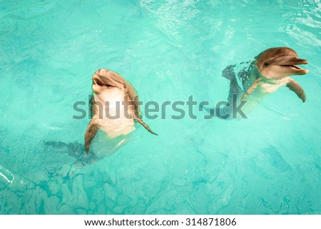Two dolphins emerging out of the water - stock photo