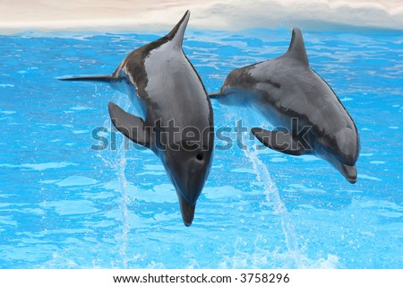 Two dolphins jumping - stock photo