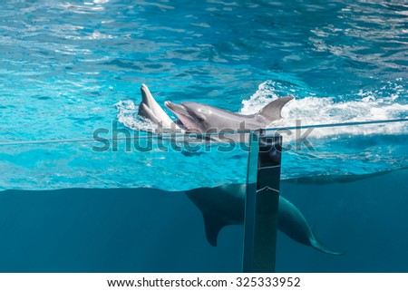 two dolphins, one atop the other, floating backwards in the pool - stock photo