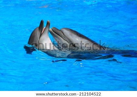 two dolphins plivushchy on water - stock photo