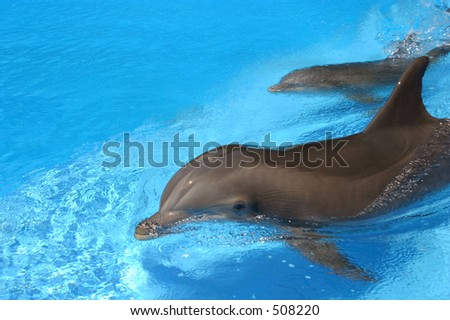 Two dolphins swimming in a pool.