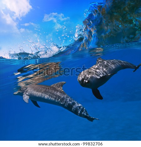 two dolphins underwater and breaking splashing wave above them - stock photo