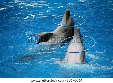 Two dolphins with hoops. - stock photo
