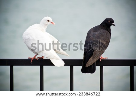 Two Doves - stock photo