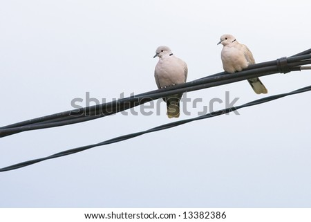 Two doves in wire - stock photo