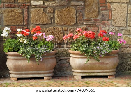 two elegant  flowerpots with blooms - stock photo