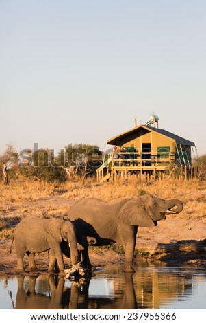 Two elephants drinking at a waterhole beside a lodge - stock photo