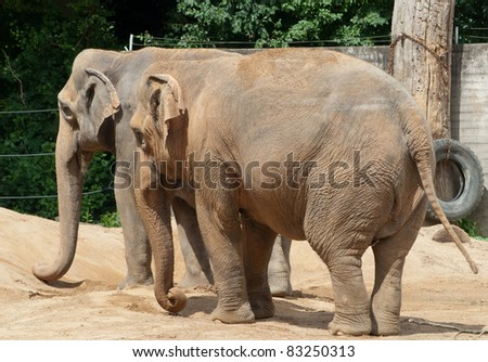 two elephants taking a sandbath