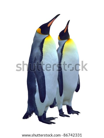 Two emperor penguin isolated on white with clipping path - stock photo