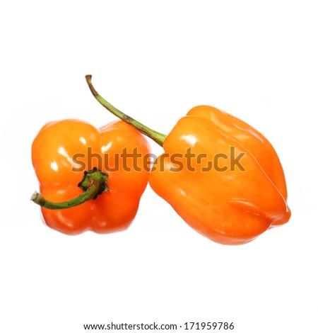 Two Extremely Hot Habanero Peppers isolated on white background - stock photo