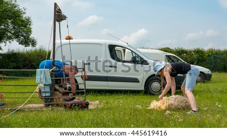 Two farmers shearing sheep in a field - stock photo