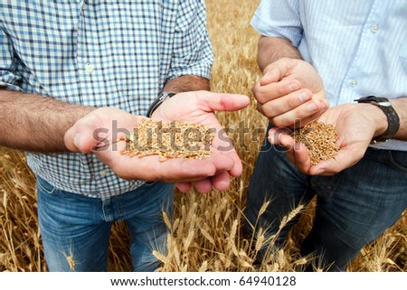 Two farmers with a grain of wheat in his hands. - stock photo