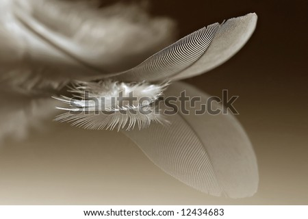 Two feathers of different sizes on a reflective surface - stock photo
