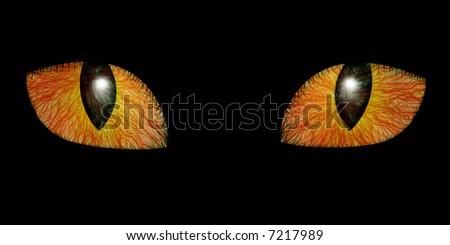 Two feline eyes on black background - stock photo