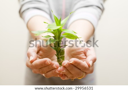 two female hands holding a beautiful green plant - stock photo