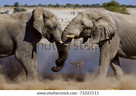 two fighting elephants at a water hole in the dusty desert of Etosha National Park, Namibia - stock photo