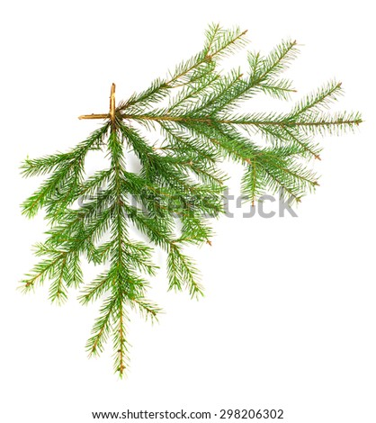 Two fir twigs at straight angle on white isolated - stock photo