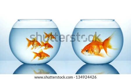 Two fishbowls with gild fishes - stock photo