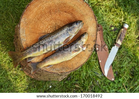 Two fishes - Still life with trout on wood log and knife - stock photo