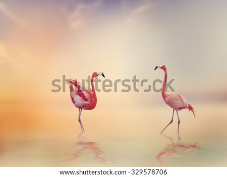 Two Flamingos in The Lake at Sunset - stock photo